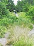 Watson Trail