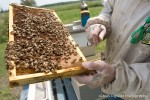 Ray Heeringa inspects a honeycomb at one of his apiaries.