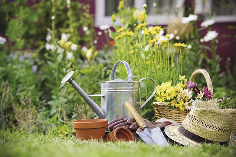 GUEST COLUMN The siren call of garden catalogues The Sarnia Journal