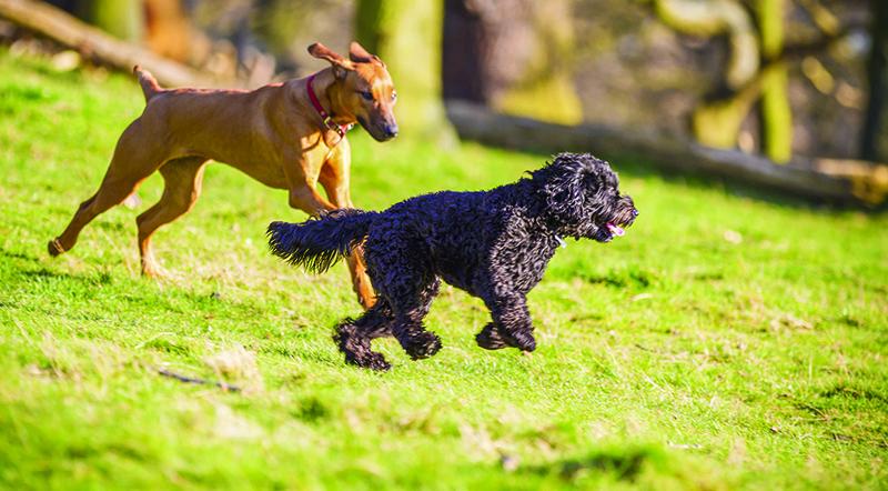 Germain Dog Park Sarnia
