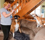 Marita Linde of Awesome Paws Pet Services offers treats to two of her boarders, Diesel and Bella. Cathy Dobson