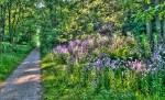 Wildflowers (phlox ) along the Howard Watson Trail. Glenn Ogilvie