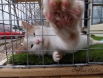 """Jim was the very first cat to try out the 'Cat's Haven,"""" a new addition at the Sarnia Humane Society that allows felines to enjoy fresh air and shineshine by climbing through an open window to a carpetted enclosure outside. Glenn Ogilvie"""